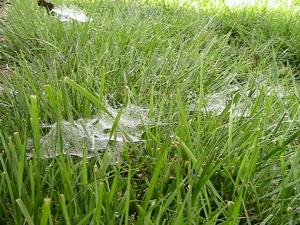 Lawnwebs