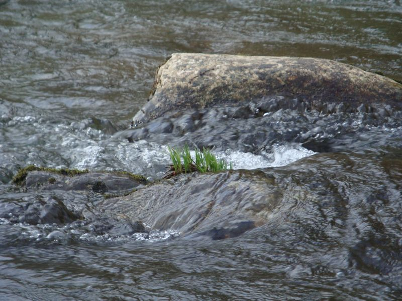 Hope in the River