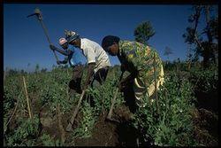 Africa-farmers