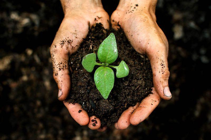 Soil-hands-web