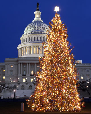 Capitol-Christmas-Tree