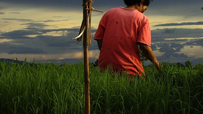 Agrarian-Utopia-024